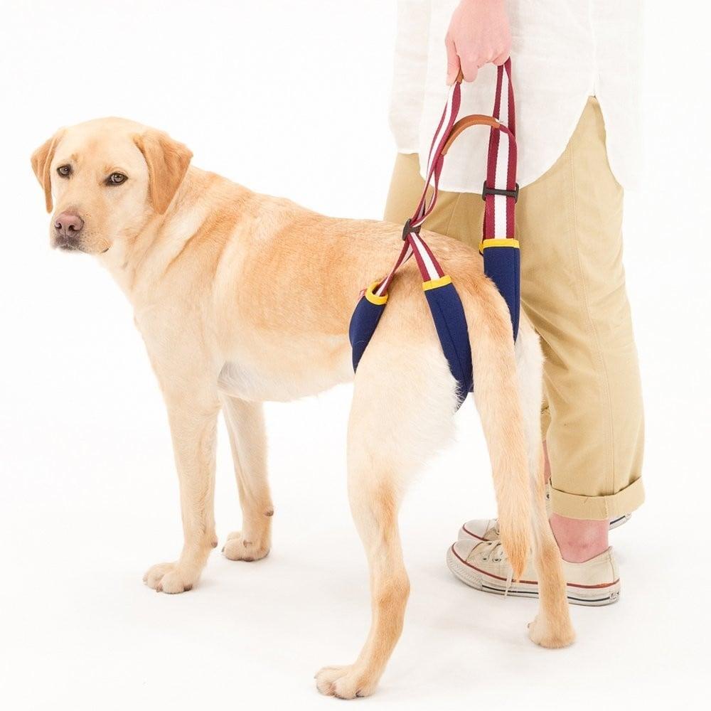 後足用の介護用ハーネスをつけた犬