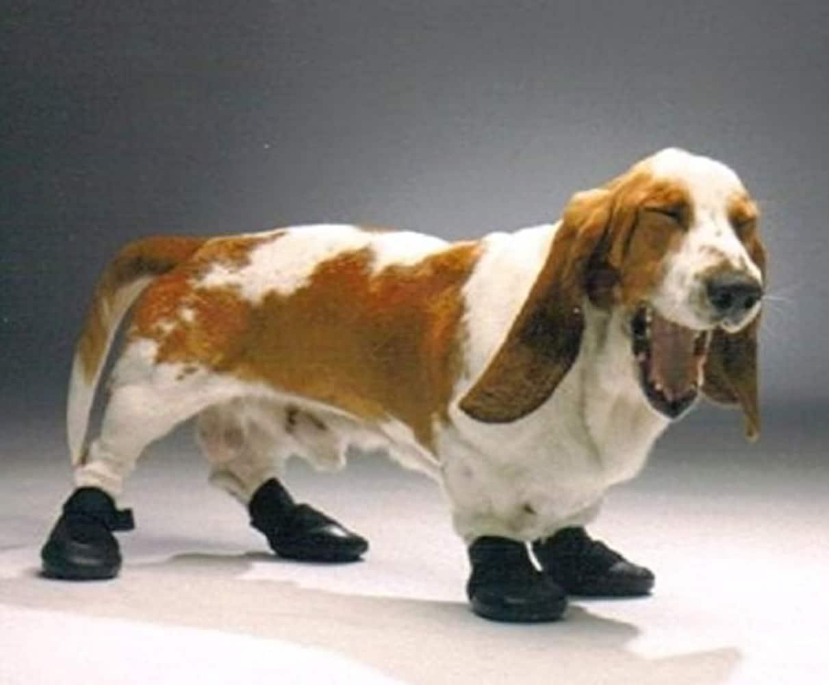 ナックリング防止用ブーツ