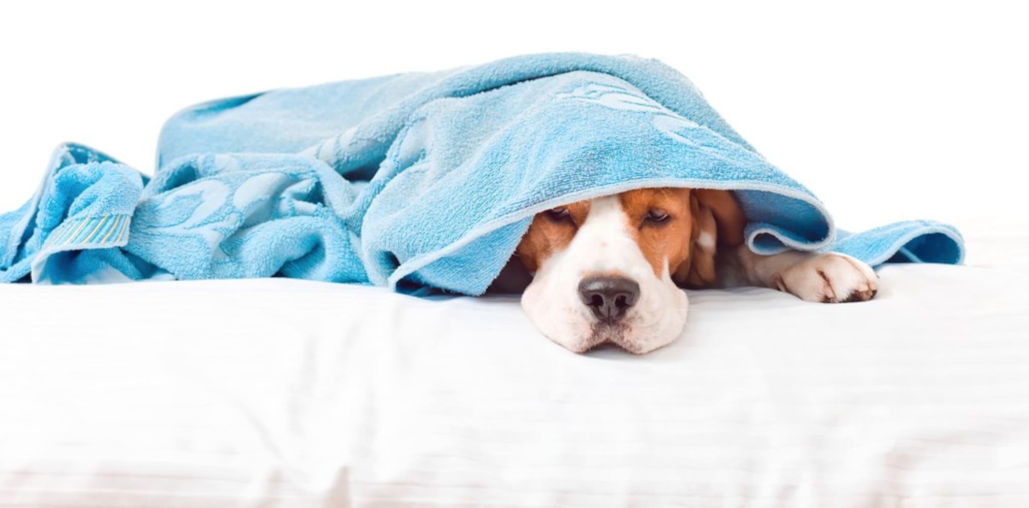 マットの上で寝ている犬