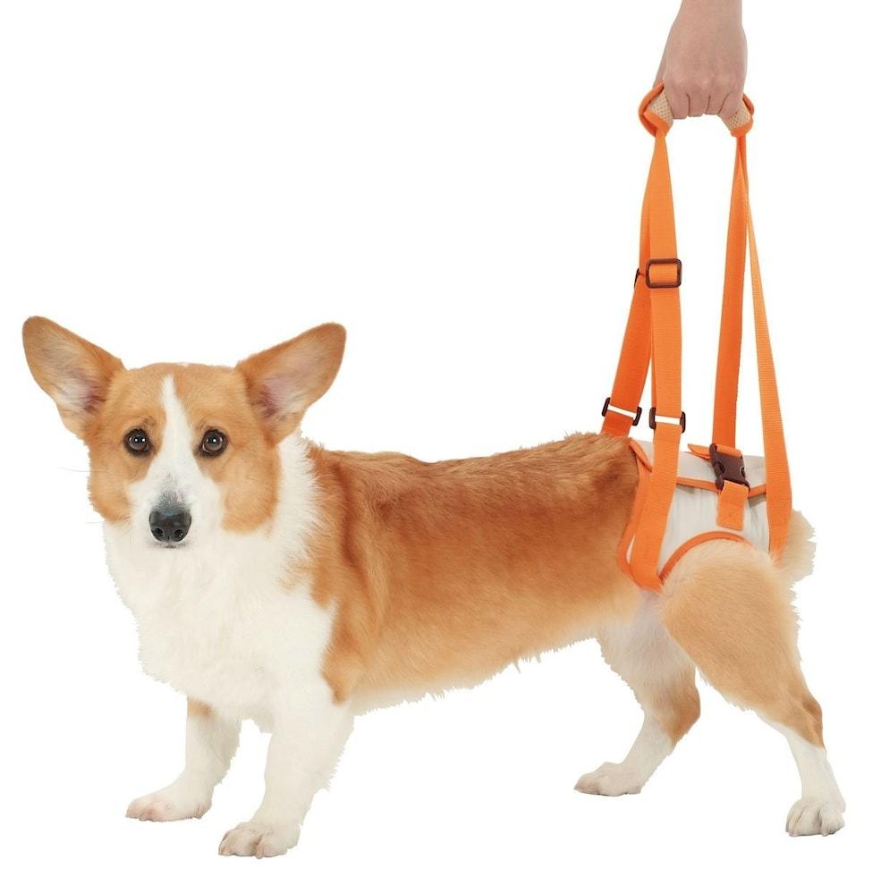 犬の介護用ハーネス