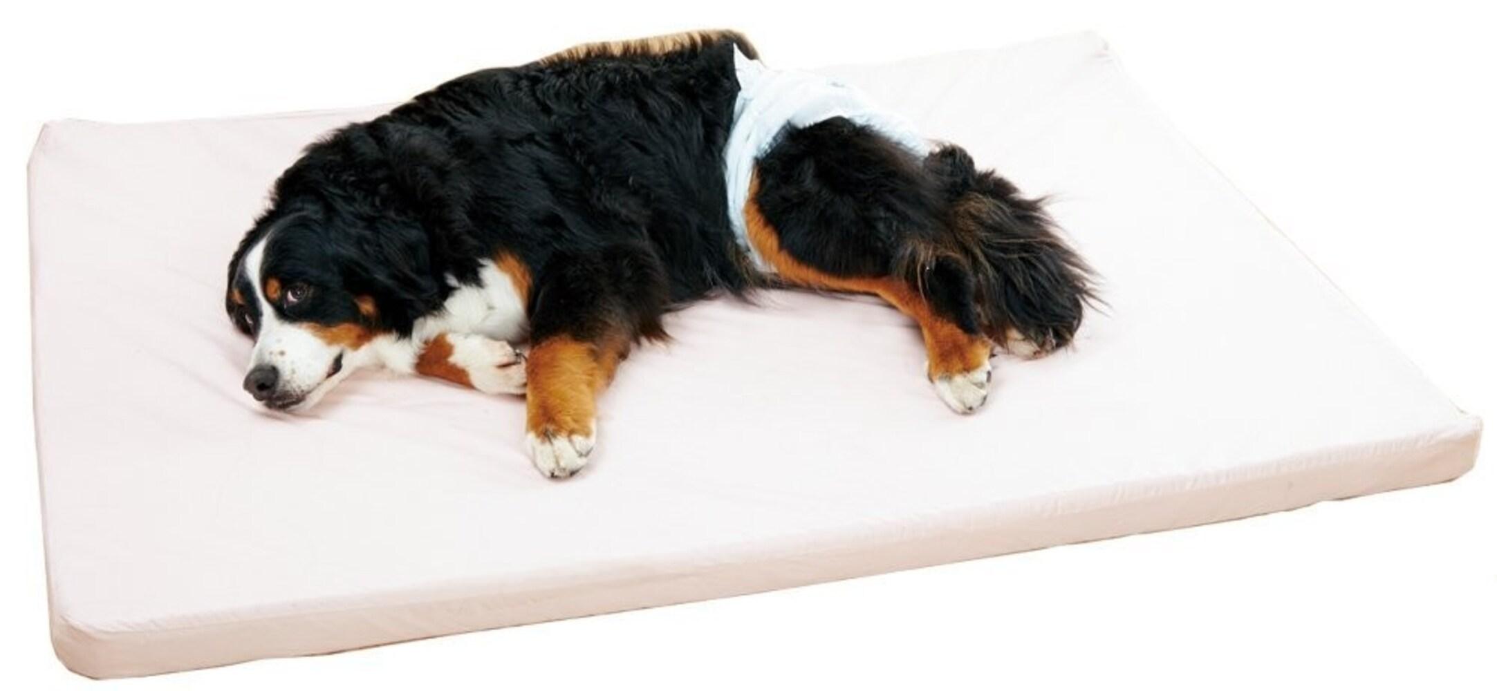 犬の介護用マット