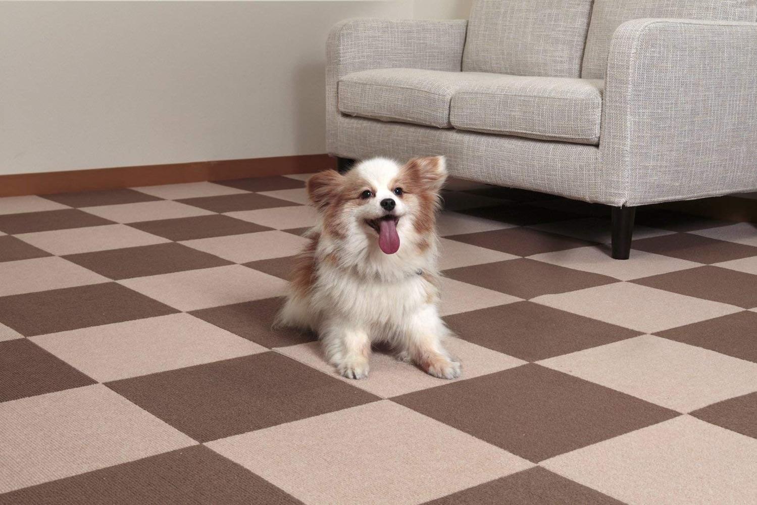 マットの上でくつろぐ犬
