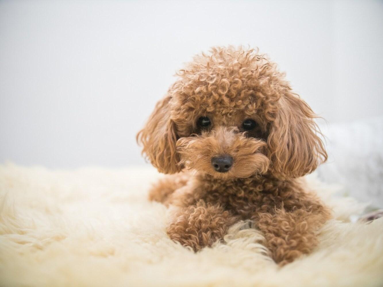 安全性|愛犬の健康を考えるなら無添加のものを
