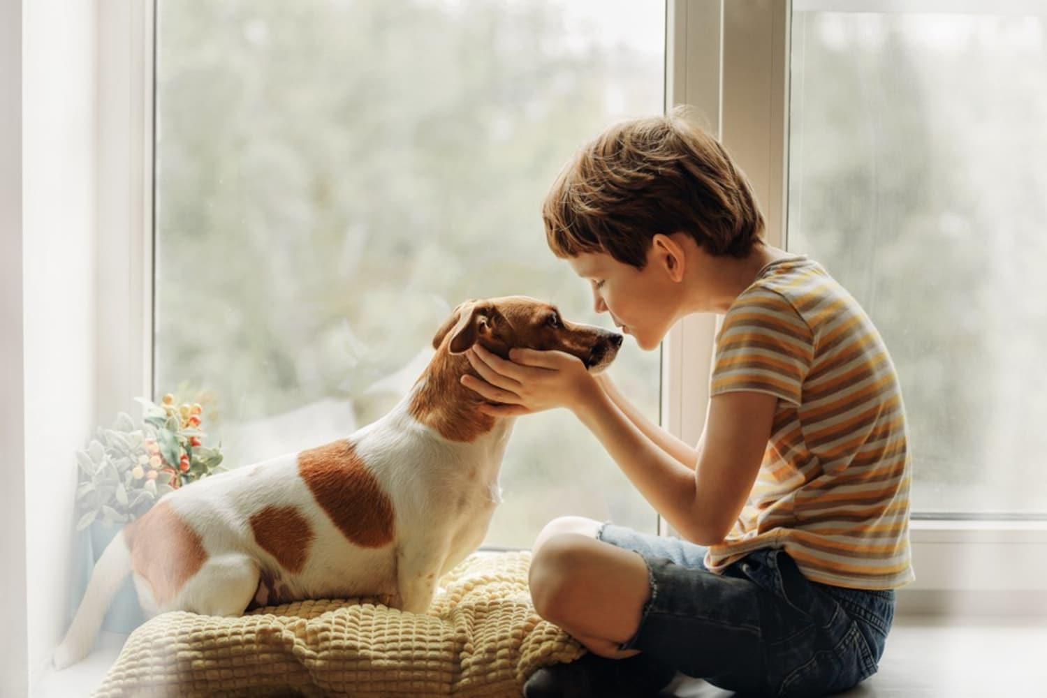 成分2 成犬、シニア犬にはカロリー過多に注意!