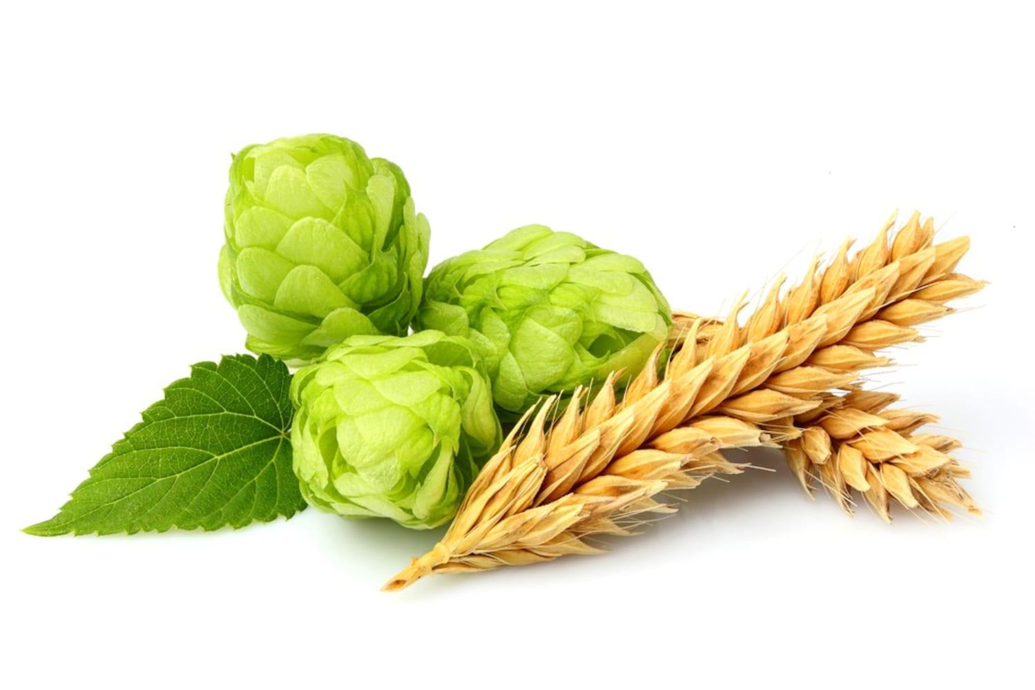 原料|旨さの秘訣は「麦芽」と「ホップ」