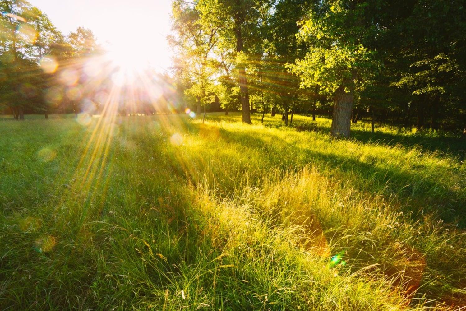 遮光性|天気がいい日に外で液晶がきちんと見えるかどうか