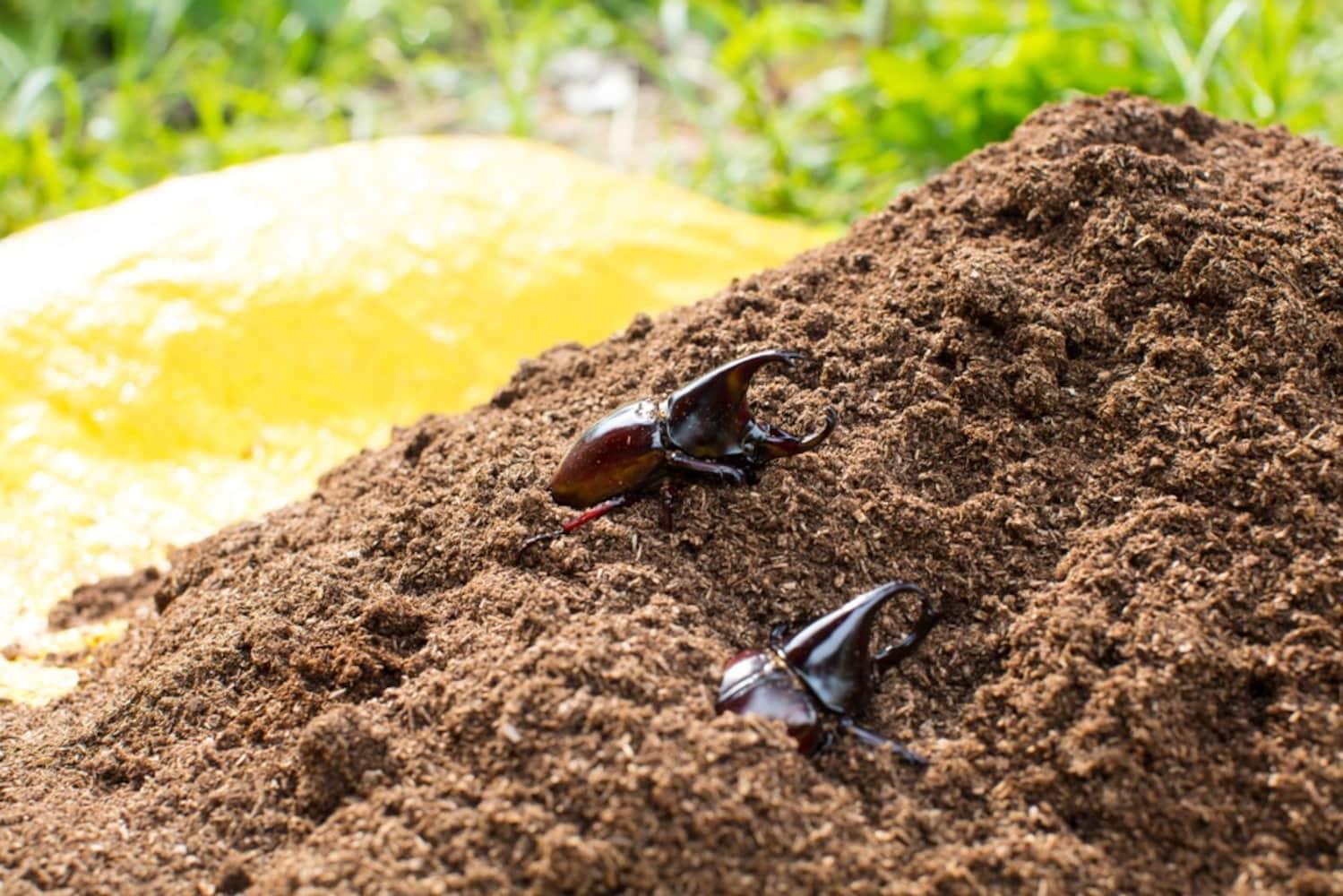 効果|土の防寒対策や、雑草・菌の増加を予防できる