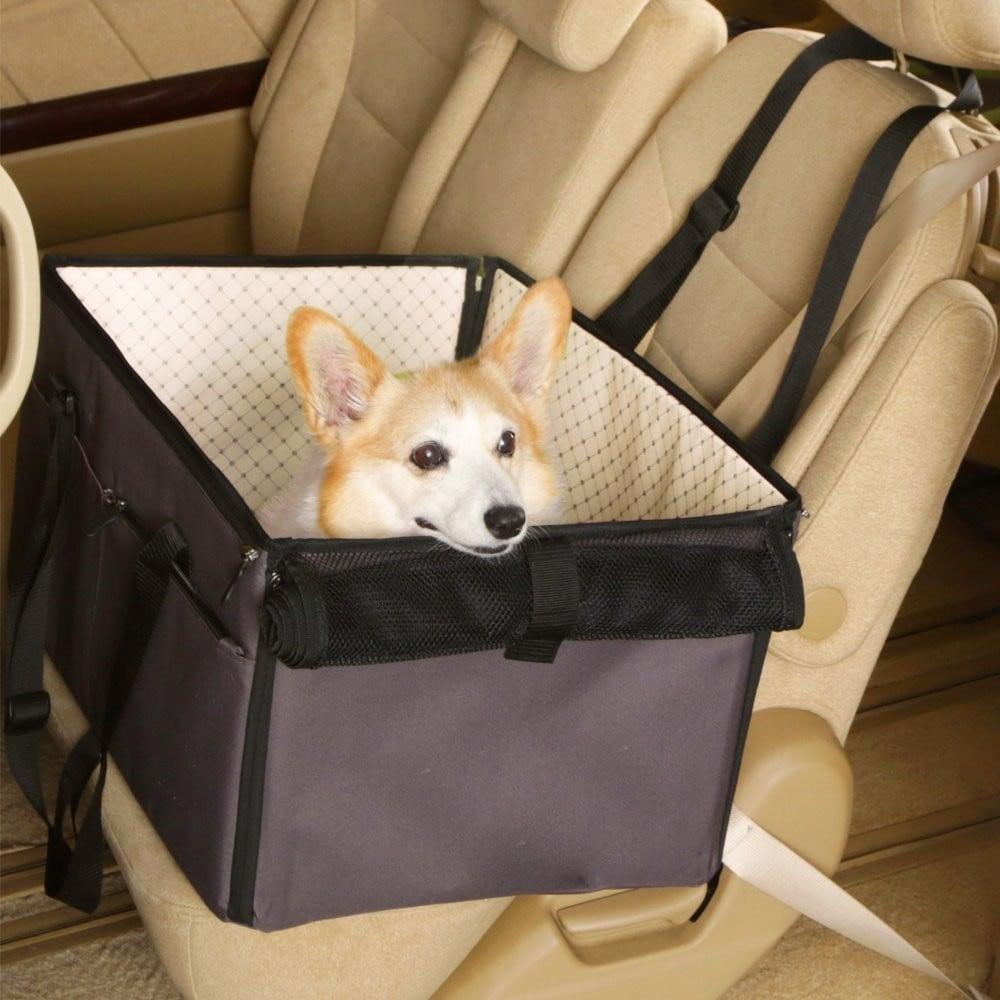 安定感 飛び出し防止リード必須!急ブレーキから愛犬を守る