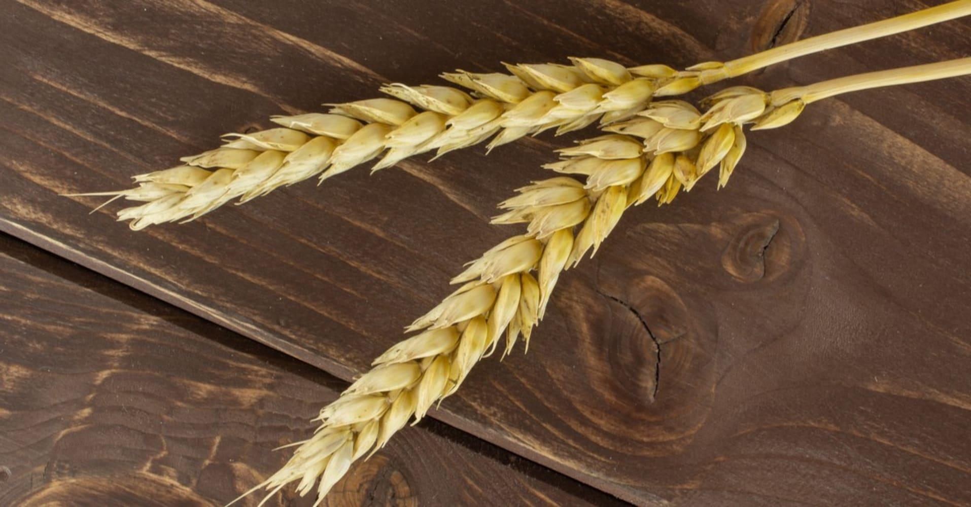 甘い味わいの『二条大麦』