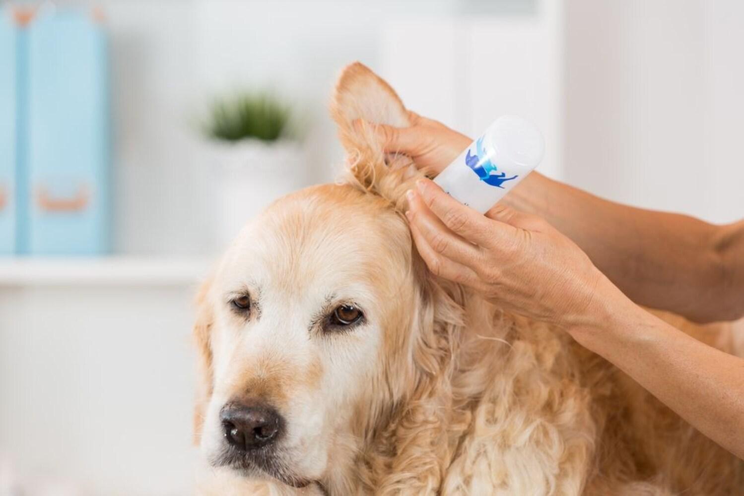 犬 耳 掃除 犬の耳掃除の正しいやり方!頻度や洗浄方法、嫌がるときの対処法から...