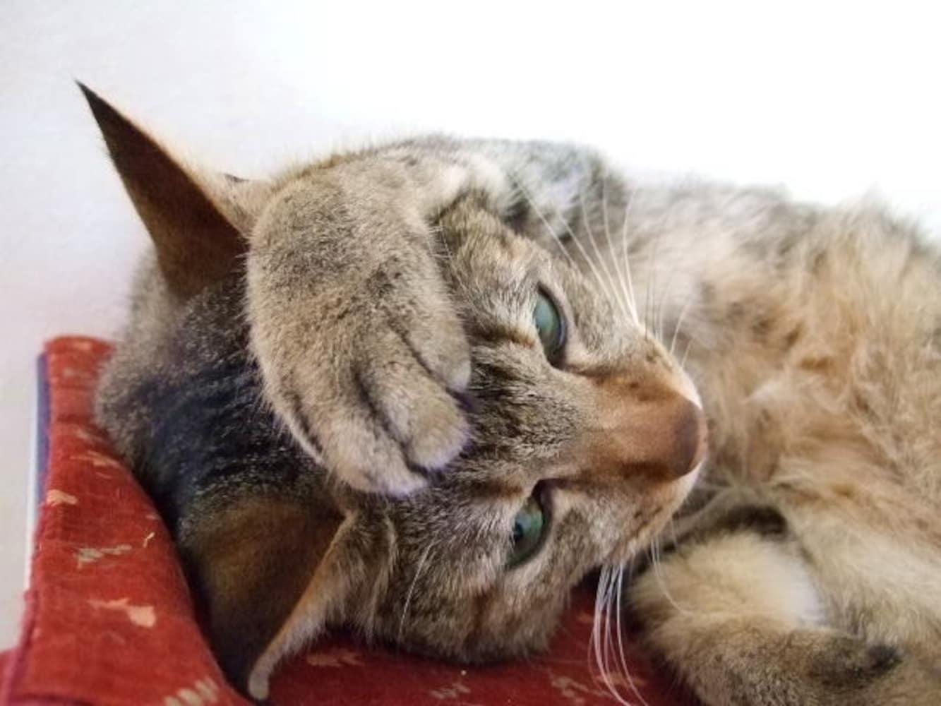 困ったポーズの猫