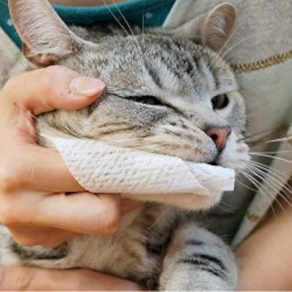 歯磨きする猫
