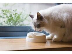 猫に薬を上手に飲ませる方法は?オブラートに包む方法など