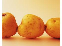 ジャガイモの栽培方法・育て方とは?