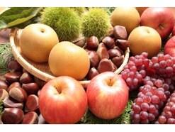 秋の果物・味覚狩りの時期とおいしい果実の見分け方