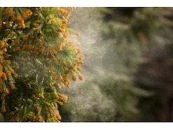 眠くなりにくい花粉症の薬の選び方…眠気と薬の関係