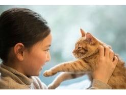 猫を飼う覚悟と必要な条件