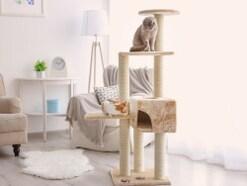 猫が落ち着く部屋作り!4つのポイント