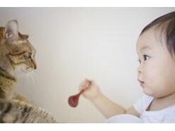 猫と赤ちゃん・妊婦が同居するときの注意点