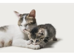 猫の噛み癖、ひっかき癖の直し方