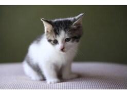 猫アレルギーの症状と対処法