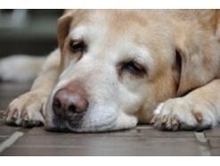 寝てばかりの老犬……老化度チェックと老化を遅らせる生活習慣とは