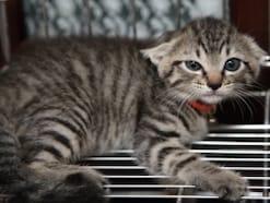 耳でわかる猫の気持ち:伏せ耳編