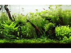 熱帯魚飼育での水合わせ!やり方と時間の目安
