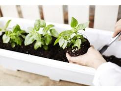 屋上菜園の作り方!屋上で野菜を育てるコツ