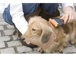 自宅で愛犬のグルーミング(トリミング)する方法