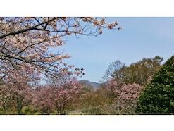 北海道の桜の名所7選!お花見で行きたいスポット【2019】