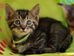 猫との縁……猫は自分で飼い主を選ぶ? 出会うのには意味がある
