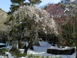 江ノ島周辺穴場コース 梅の咲く常立寺から海まで散策