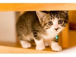 猫が文句を言う?あなたは猫にストレスを与えていませんか?