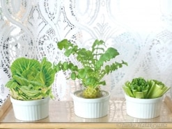 土なしプチ家庭菜園!野菜の水耕栽培をキッチンで楽しむ方法