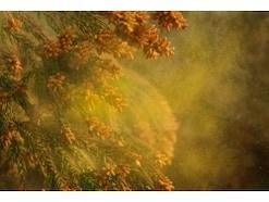花粉症による肌荒れやかゆみの予防法・治療法
