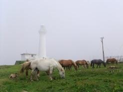 青森・尻屋崎 寒立馬がのびのびと暮らす風景へ