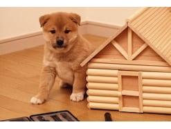犬のゲージは必要?メリットや選び方、使い方や注意点