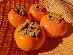 柿を英語でなんと言う?干し柿や渋柿も英語で言える!
