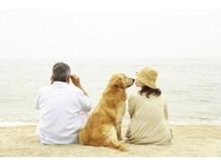 愛犬の首輪の選び方!失敗しないサイズや素材、ハーネスとの違い