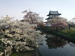 松前城の桜 北海道に春を告げる多彩な八重桜に感動!