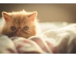 初めて子猫を飼うときに気を付けるべき4つのポイント