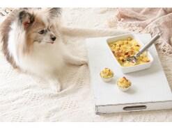 犬用ケーキレシピ!さつまいも&ヨーグルト 簡単手作り