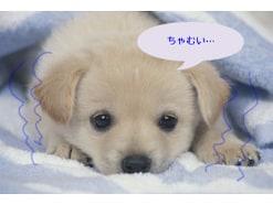 犬が震えるのはなぜ?考えられる4つの原因と対処法