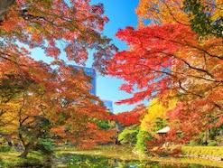 東京の紅葉2018!名所&穴場おすすめランキング