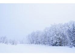 二十四節気「大雪」の意味・読み方は?2020年はいつ?風習・食べ物・冬将軍も解説