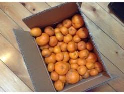 メルカリでは自宅でとれた野菜や果物の取引も活発。自分が売る場合のコツは?