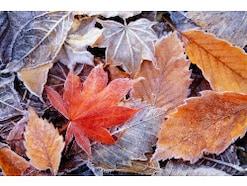 11月行事・歳時記 文化の日・酉の市・七五三…風物詩や行事まとめ
