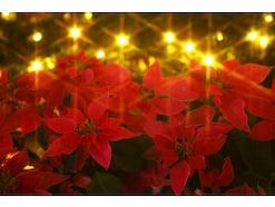 【時候の挨拶】12月上旬・中旬・下旬の季節の挨拶と結び文、ビジネスやカジュアルに対応