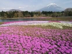 雄大な富士山を眺める絶景スポットおすすめ10選(静岡・神奈川・山梨)